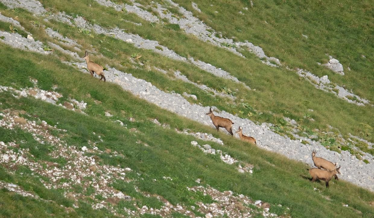 durmitor nation park animals1